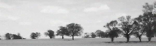 Elston Landscapes tree lined horizon